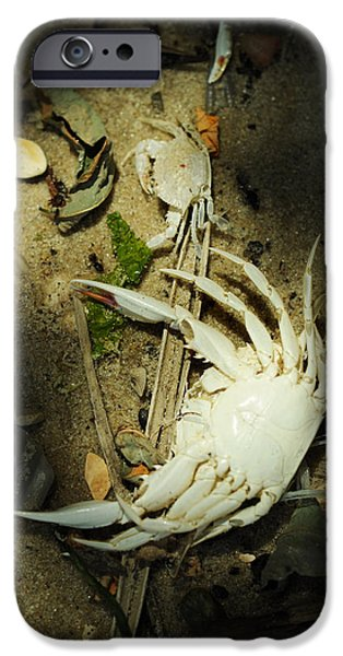 Crabbing iPhone Cases - A Time to Shed iPhone Case by Rebecca Sherman