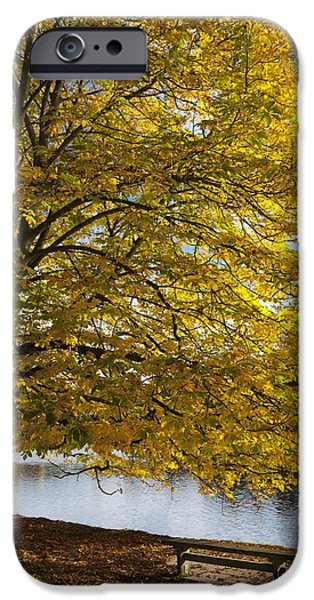 A Tree With Golden Leaves And A Park iPhone Case by John Short