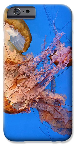 A Trio of Jellyfish iPhone Case by Kristin Elmquist