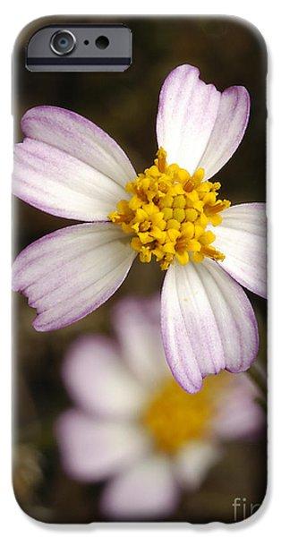 Biden iPhone Cases - Aceitillo Flower iPhone Case by Raul Gonzalez Perez
