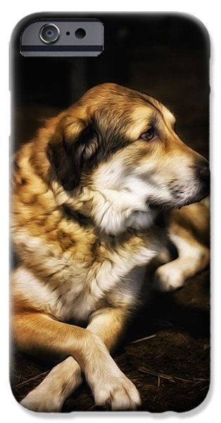 Mixed Labrador Retriever iPhone Cases - Adam - The Loving Dog iPhone Case by Bill Tiepelman