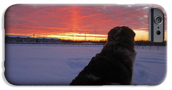 Dog In Landscape iPhone Cases - Admiring the Sunset iPhone Case by Alanna Dumonceaux