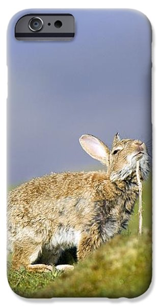Adult Rabbit Marking Scent iPhone Case by Duncan Shaw