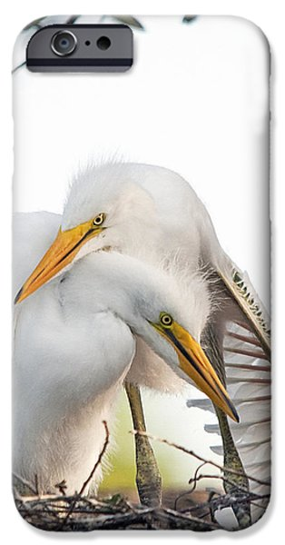 Affectionate Chicks iPhone Case by Kenneth Albin