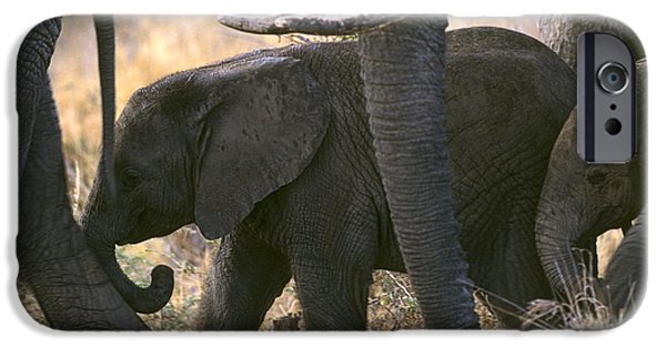 Elephants iPhone Cases - African Elephant iPhone Case by Don Hooper