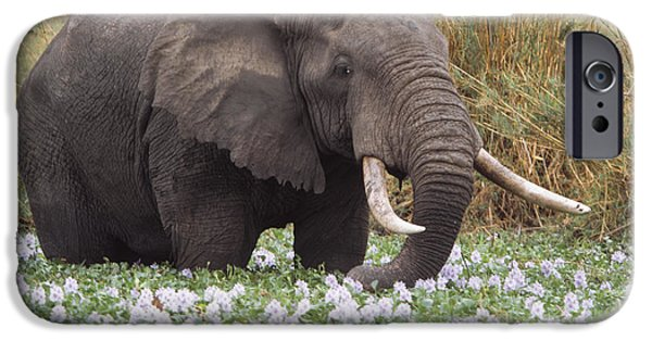 Elephant iPhone Cases - African Elephant Grazing Amongst Water iPhone Case by Axiom Photographic