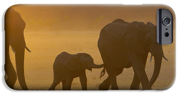 Following iPhone Cases - African Elephant Loxodonta Africana iPhone Case by Pete Oxford