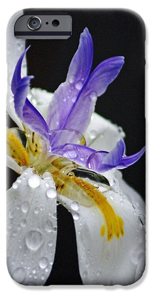 Raindrops iPhone Cases - African Iris iPhone Case by Holly Kempe