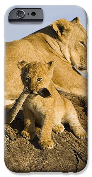 African Lion With Mother's Tail iPhone Case by Suzi Eszterhas