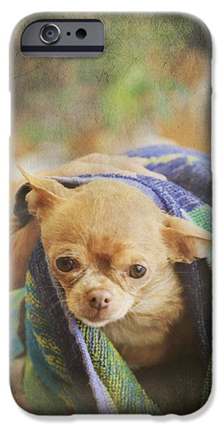 Canine Digital iPhone Cases - After The Bath iPhone Case by Laurie Search