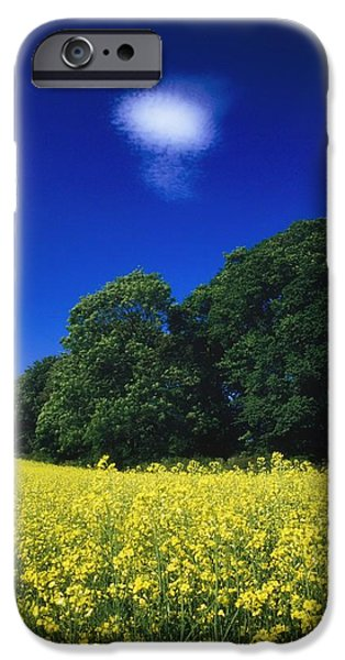 Field. Cloud iPhone Cases - Agriculture, Oil Seed Rape, Ireland iPhone Case by The Irish Image Collection
