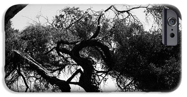 Alcatraz iPhone Cases - Alcatraz Tree iPhone Case by Ty Helbach