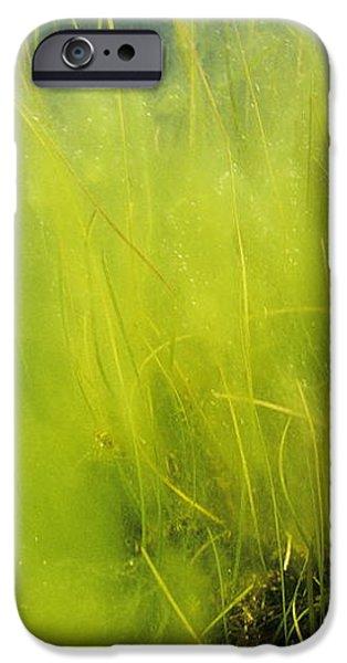 Algae iPhone Case by Alexis Rosenfeld