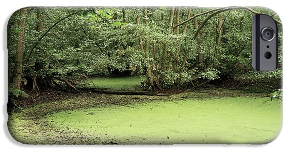 Algal Photographs iPhone Cases - Algal Bloom In Pond iPhone Case by Michael Marten