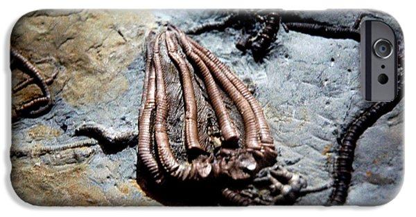 Smithsonian Museum iPhone Cases - Alien Fossil   iPhone Case by LeeAnn McLaneGoetz McLaneGoetzStudioLLCcom