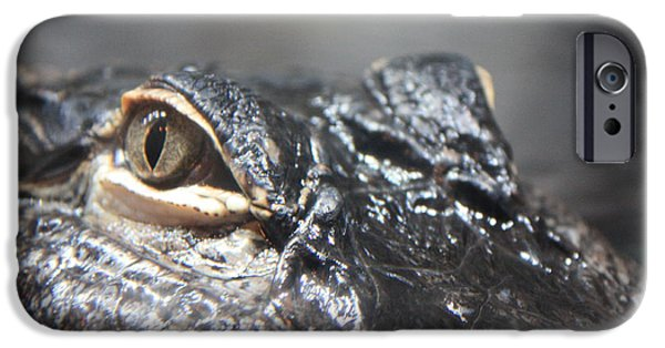 Reptiles iPhone Cases - Alligator Eye iPhone Case by Carol Groenen