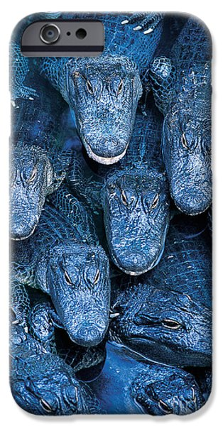 Alligator iPhone Cases - Alligators iPhone Case by Gary Meszaros and Photo Researchers