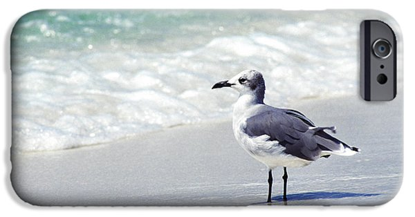 Herring Gull iPhone Cases - Alone on the Beach iPhone Case by Thomas R Fletcher