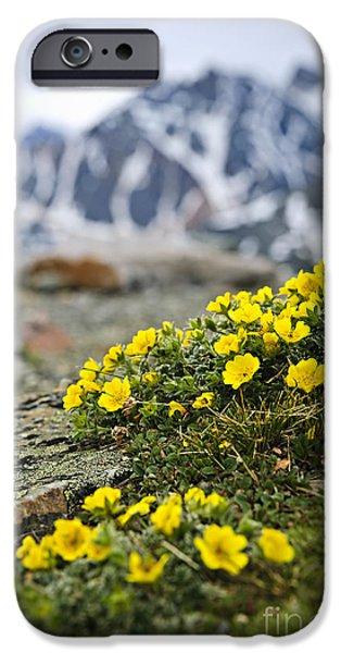Meadow Photographs iPhone Cases - Alpine meadow  iPhone Case by Elena Elisseeva