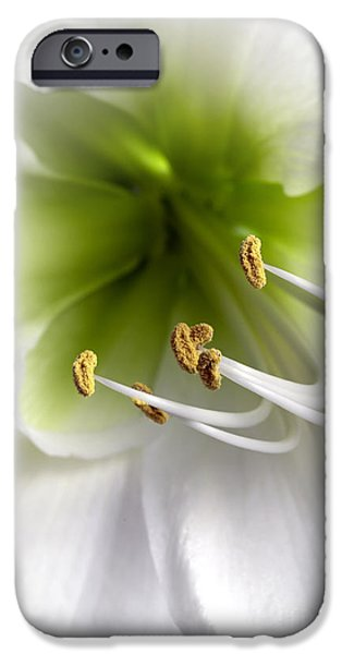 Anther iPhone Cases - Amaryllis  iPhone Case by Jane Rix