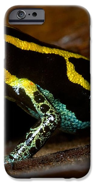 Amazonian Poison Frog iPhone Case by Dant� Fenolio