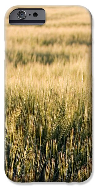Amber Waves of Grain iPhone Case by Cindy Singleton
