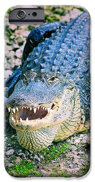 Wild Animals iPhone Cases - American Alligator iPhone Case by Rudy Umans
