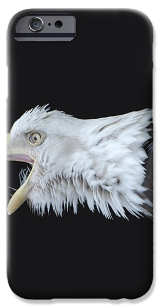 American Bald Eagle iPhone Case by Paul Ward