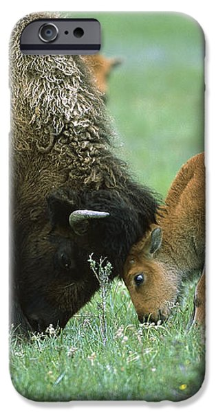 American Bison Cow And Calf iPhone Case by Suzi Eszterhas