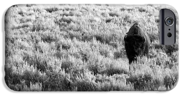 American Bison iPhone Cases - American Bison in Black and White iPhone Case by Sebastian Musial