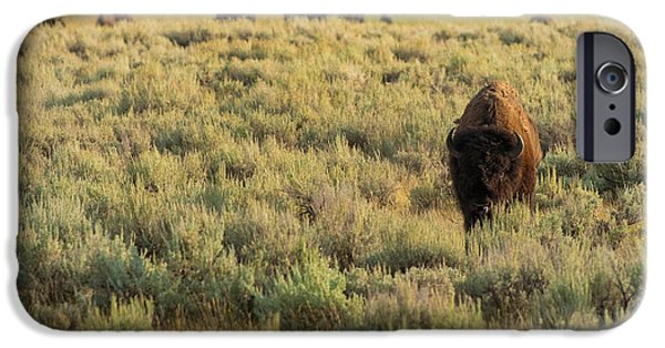 Yellowstone iPhone Cases - American Bison iPhone Case by Sebastian Musial