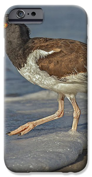 American Oystercatcher Grabs Breakfast iPhone Case by Susan Candelario