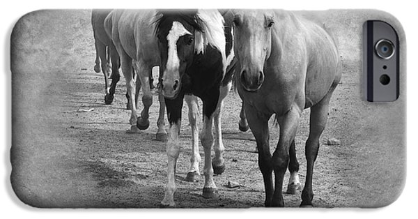 American Quarter Horse iPhone Cases - American Quarter Horse Herd in Black and White iPhone Case by Betty LaRue