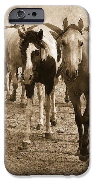 American Quarter Horse Herd in Sepia iPhone Case by Betty LaRue