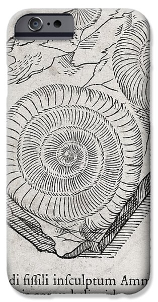 Swiss Horn iPhone Cases - Ammonite Fossil, 16th Century iPhone Case by Middle Temple Library