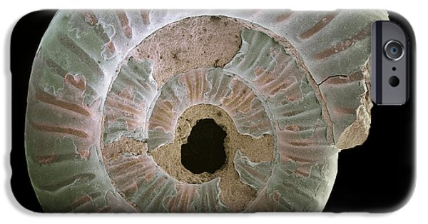 Palaeontology iPhone Cases - Ammonite Fossil, Sem iPhone Case by Steve Gschmeissner
