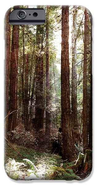 Santa Cruz Art iPhone Cases - Ancient Redwoods and Ferns iPhone Case by Laura Iverson
