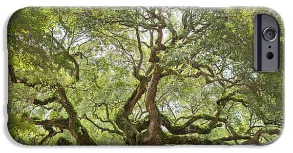 Old Trees iPhone Cases - Angel Oak Tree Johns Island 64MP iPhone Case by Dustin K Ryan