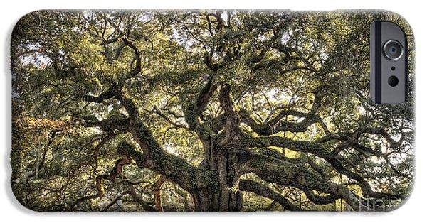 Oak Trees iPhone Cases - Angel Oak Tree Live Oak  iPhone Case by Dustin K Ryan