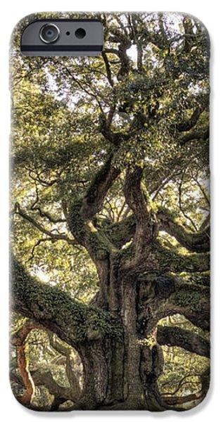 Angel Oak Tree Live Oak  iPhone Case by Dustin K Ryan