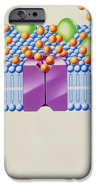 Angina Treatment: Calcium Antagonist Mechanism iPhone Case by John Bavosi