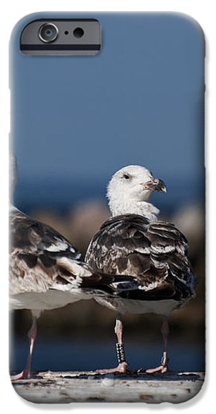 Annual Seagull Congress iPhone Case by Michael Mogensen