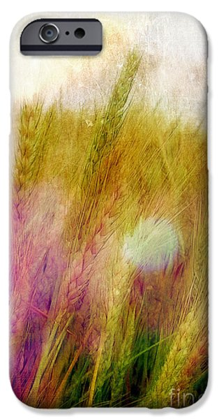 Another Field of Dreams iPhone Case by Judi Bagwell