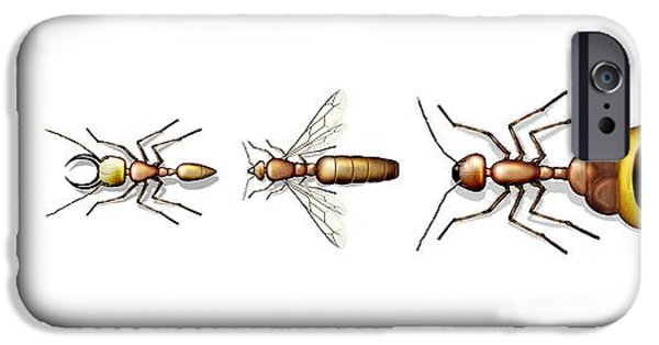 Cut-outs iPhone Cases - Ant Types, Artwork iPhone Case by Claus Lunau