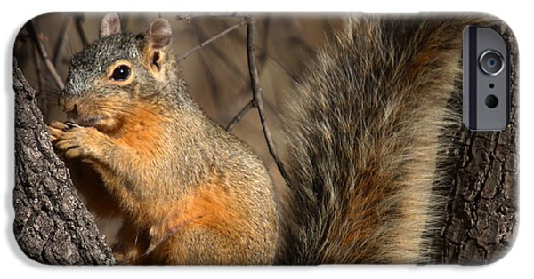 Fox Squirrel iPhone Cases - Apache Fox Squirrel iPhone Case by David Salter