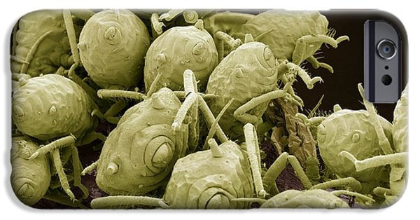 Overruns iPhone Cases - Aphids, Sem iPhone Case by Steve Gschmeissner