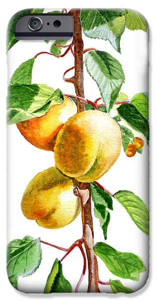 Apricots iPhone Case by Irina Sztukowski