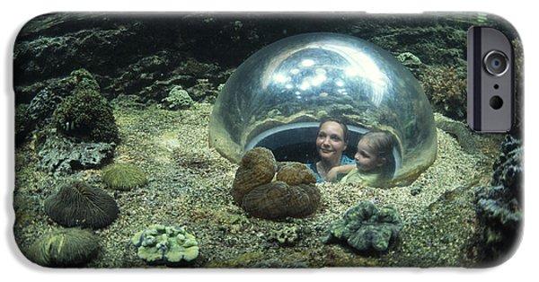 Aquatic Display iPhone Cases - Aquarium iPhone Case by Alexis Rosenfeld