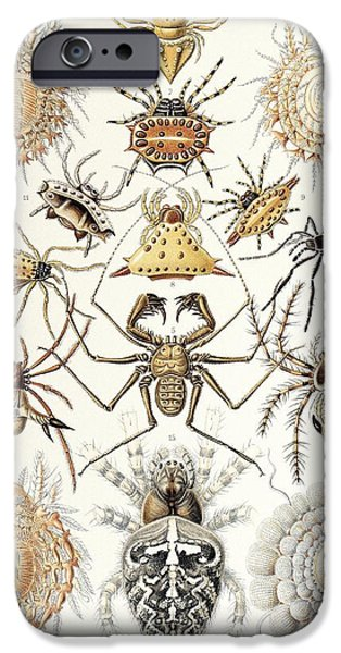 Art Forms Of Nature iPhone Cases - Arachnid Organisms, Artwork iPhone Case by Mehau Kulyk