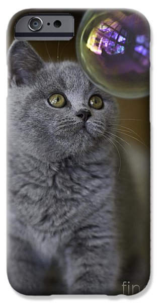 Cat iPhone Cases - Archie with bubble iPhone Case by Sheila Smart